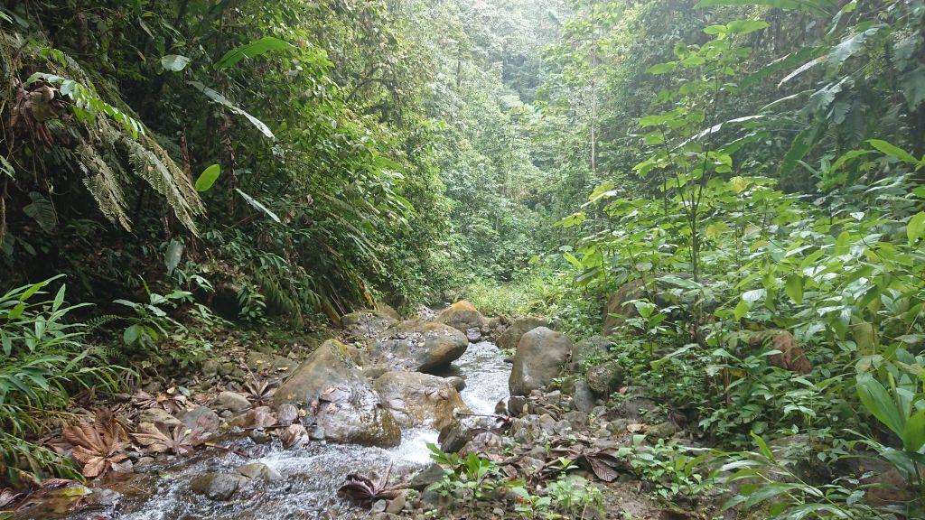 Et vandløb i Buenaventurareservatet.