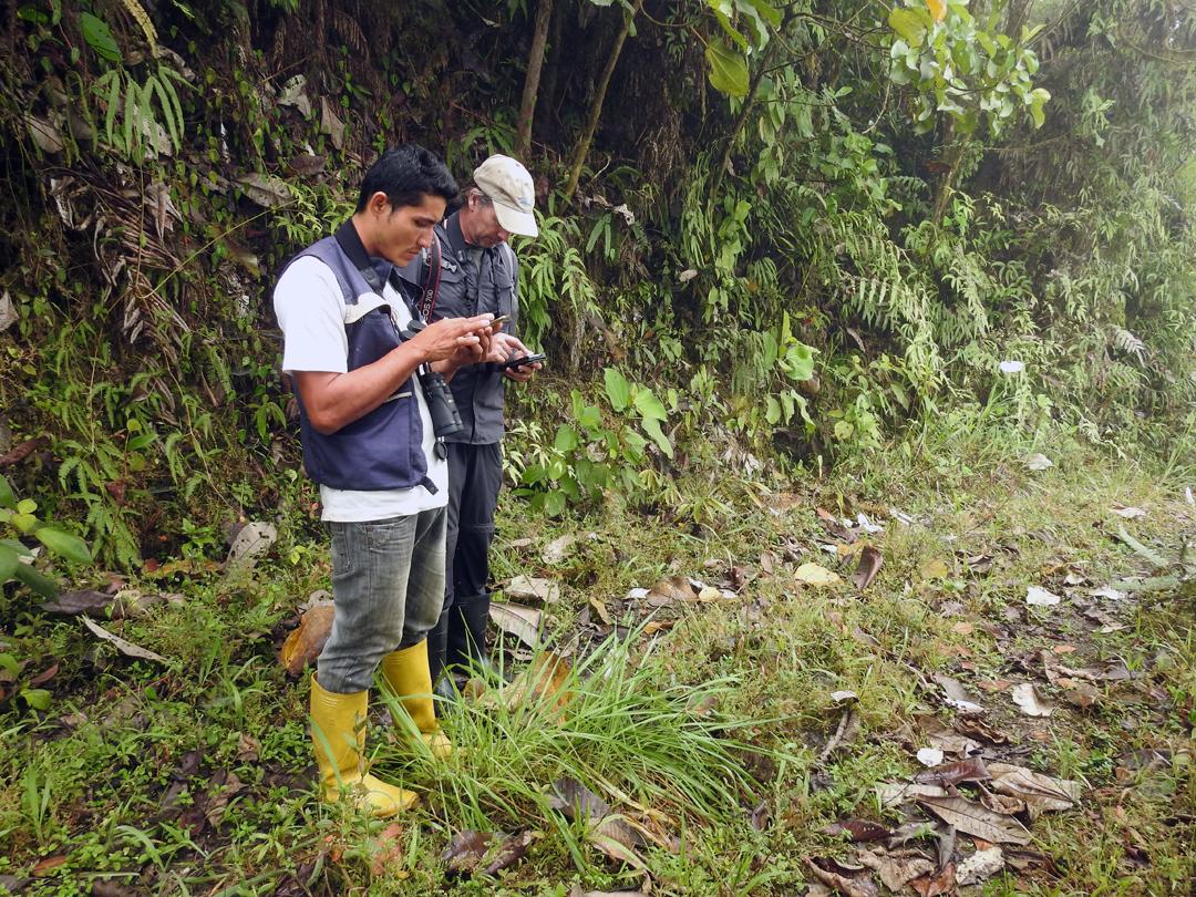 Diego og Uffe tjekker en fugleart. Buenaventura, Ecuador.