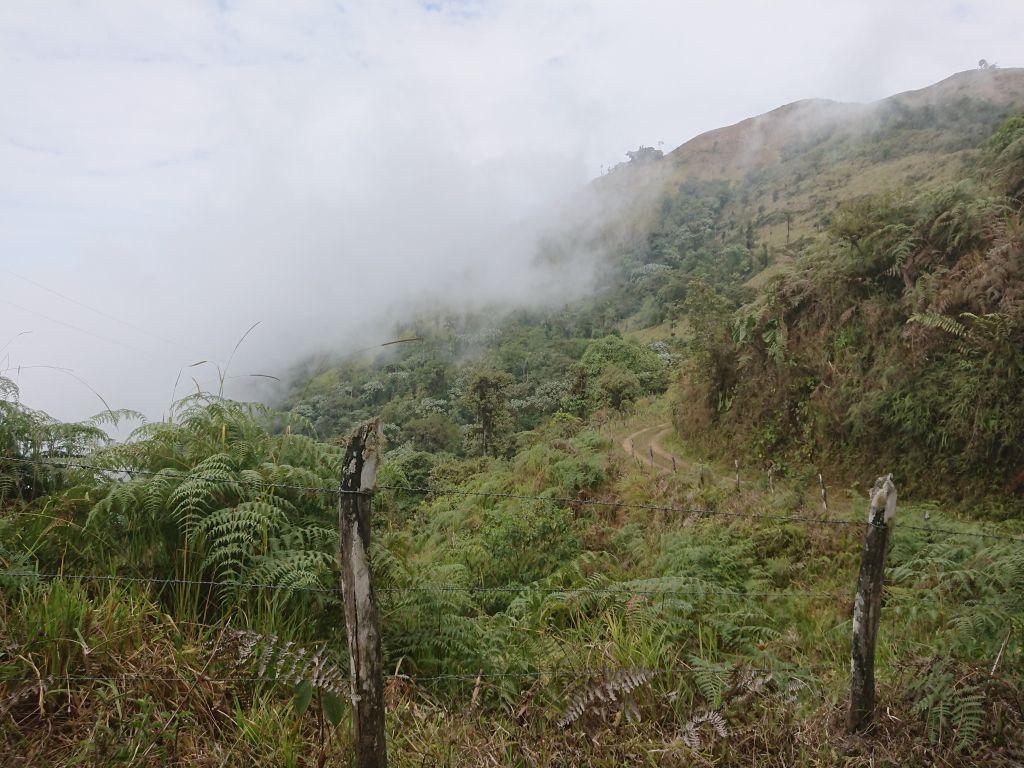 Landskabet over Buenaventura, hvor vi var med til at monitere El Oro Parakeet.