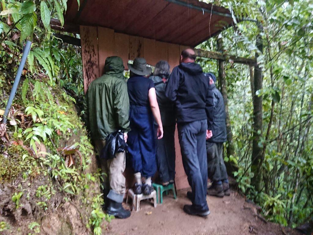 "Deltagere fra ""Sunbird Tours"" ser på Grey Tinamou. Copalinga, Zamora, Ecuador."