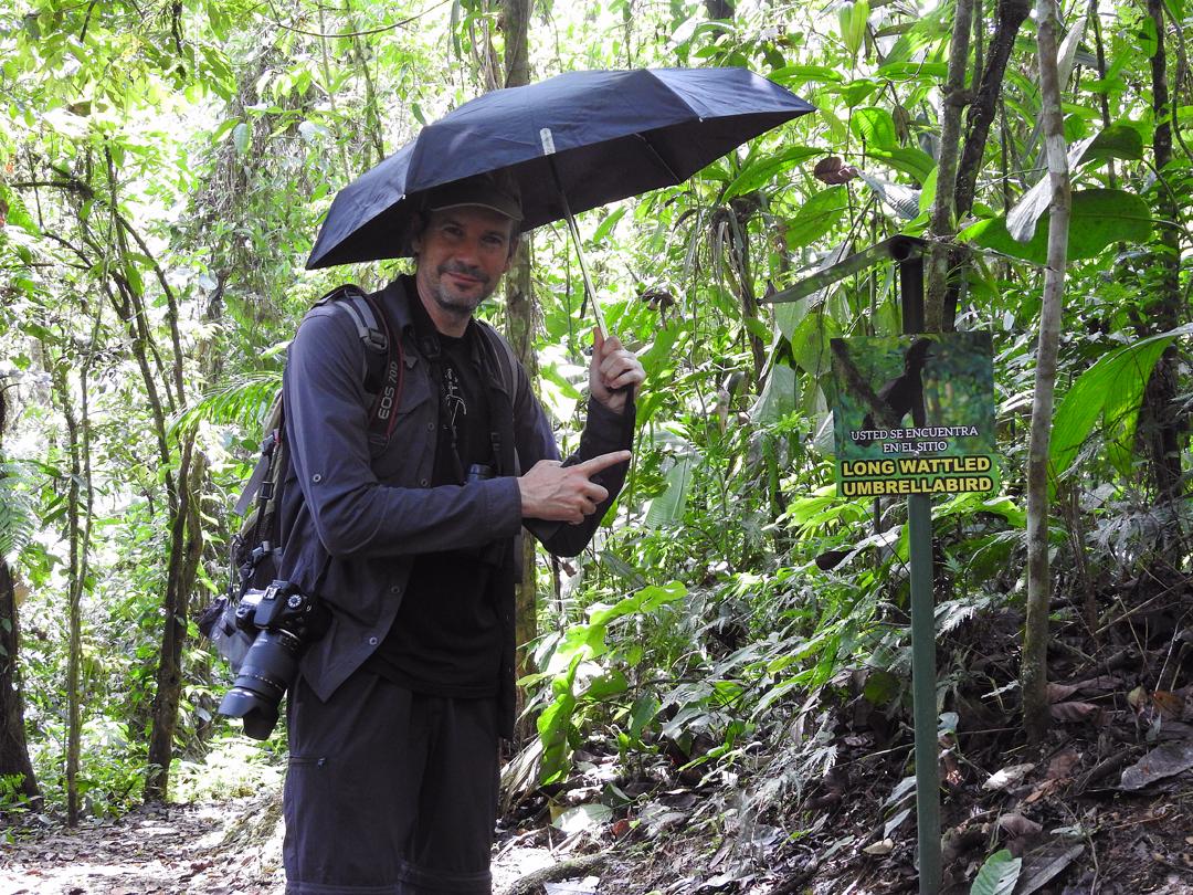 """På """"spillepladsen"""" for Long-wattled Umbrellabird. Umbrellabird Lodge, Buenaventura, Ecuador."""
