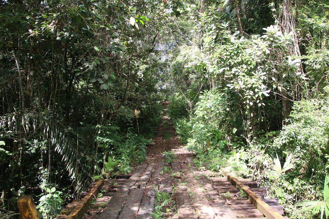 Pipeline Road, Soberania NP., Panamá.
