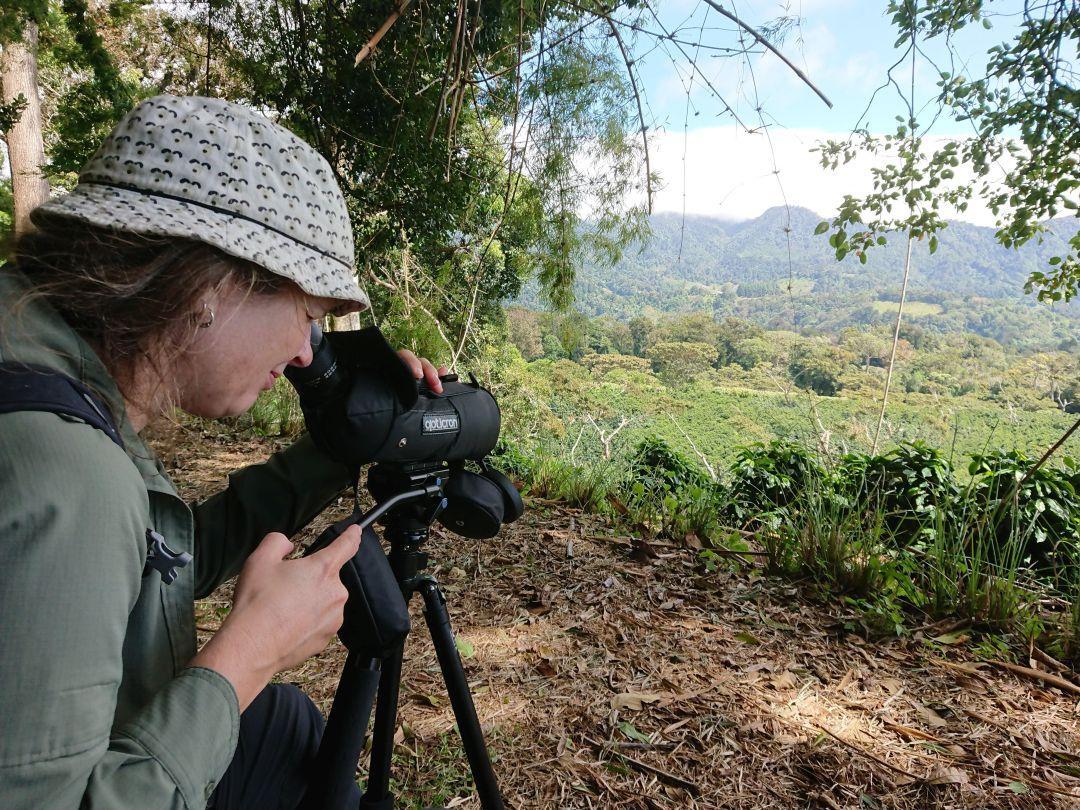 Der kræver tålmodighed, at tjekke alle dalens træer. Finca Lerida, Boquete, Panamá.