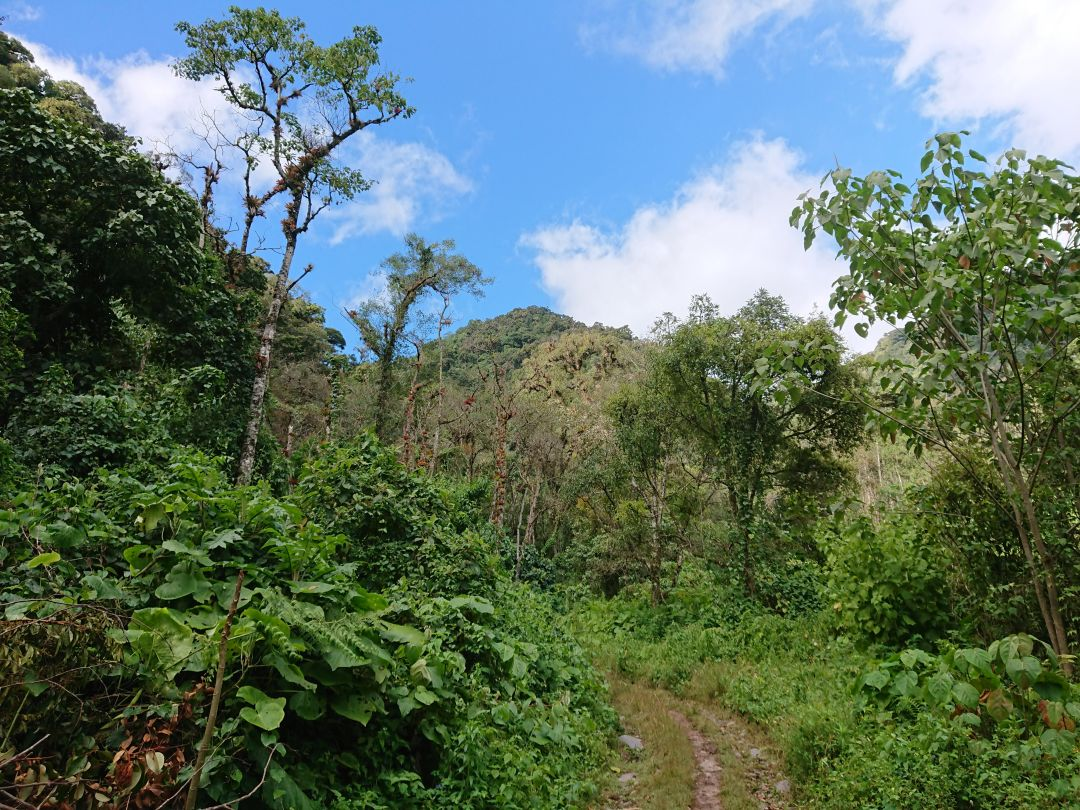 På vej for at finde Resplendent Quetzal. Pipeline Trail, Boquete, Panamá.