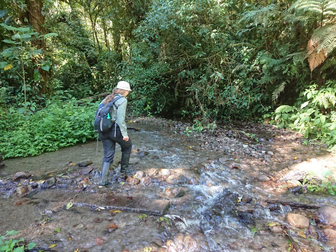 """""""River crossing"""". Sendero Los Quetzales, Boquete, Panamá."""