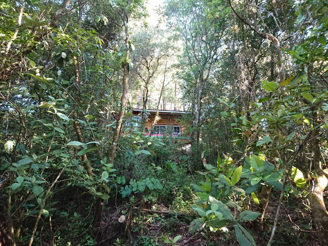 """Great Tinamou"" - Vores hjem i julen 2018. TInamou Cottage, Boquete, Panamá."