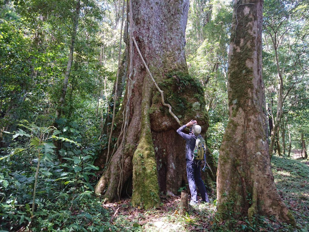 Fuglekigning i skoven. Finca Lerida, Boquete, Panamá.