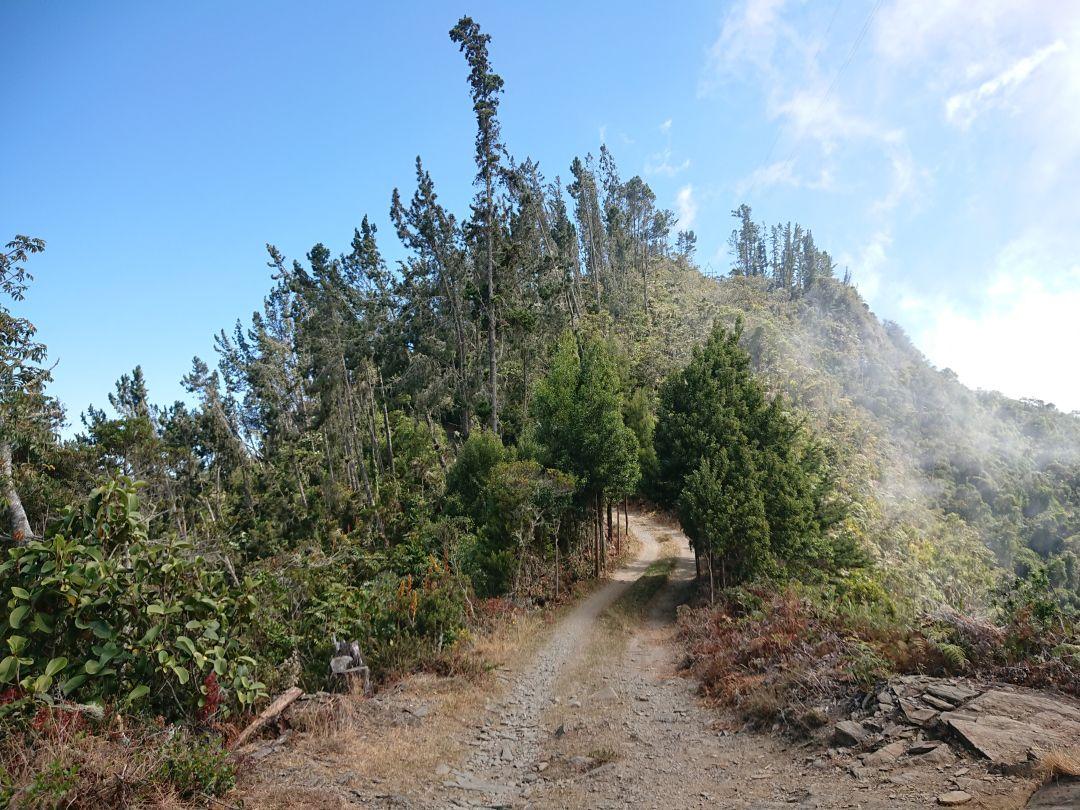 I Santa Marta bjergene finder man mange af Colombias endemiske fuglearter - og storslået natur. San Lorenzo Ridge, Sierra Nevada de Santa Marta, Colombia.