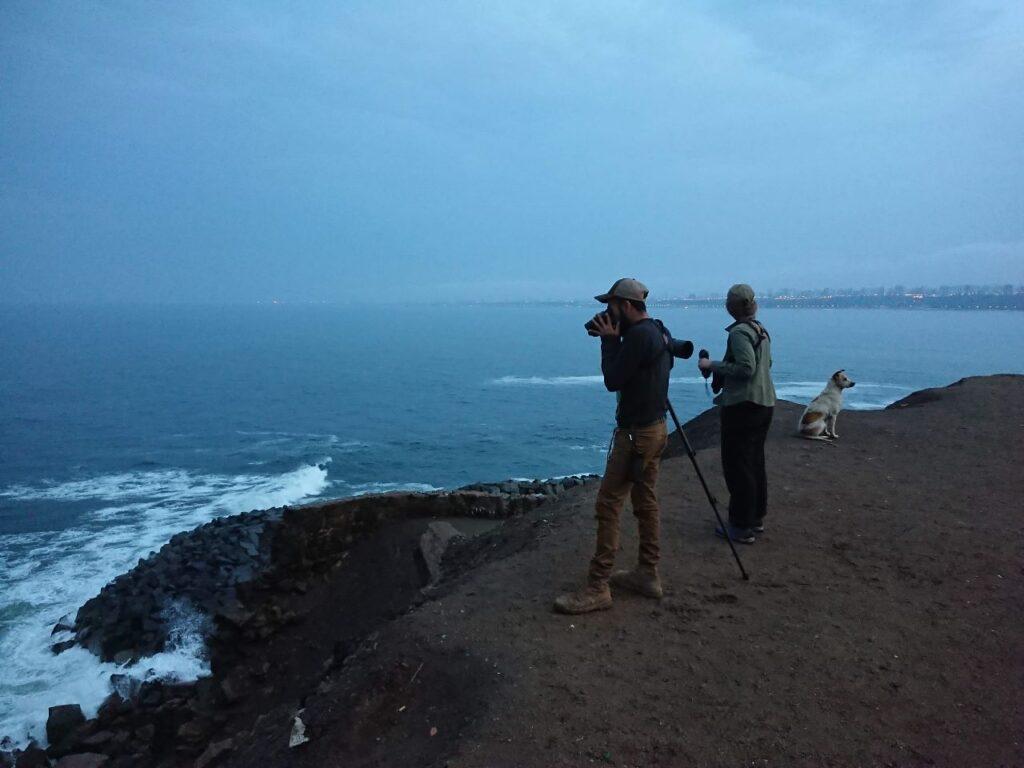 Ved Stillehavskysten syd for Perus hovedstad Lima, der ses i baggrunden, er det den endemiske Perucinclode der ledes efter.
