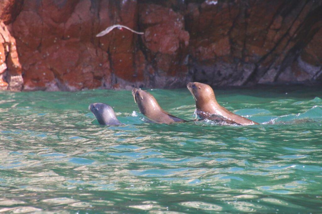 You get close to the wildlife. Sea lions, Ballestas Islands, Peru.