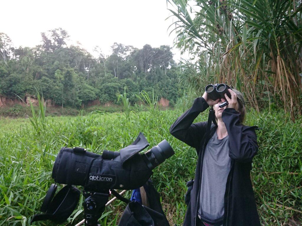 Fuglekigning i Amazonas. Chuncho Clay Lick, Tambopata National Reserve, Peru.