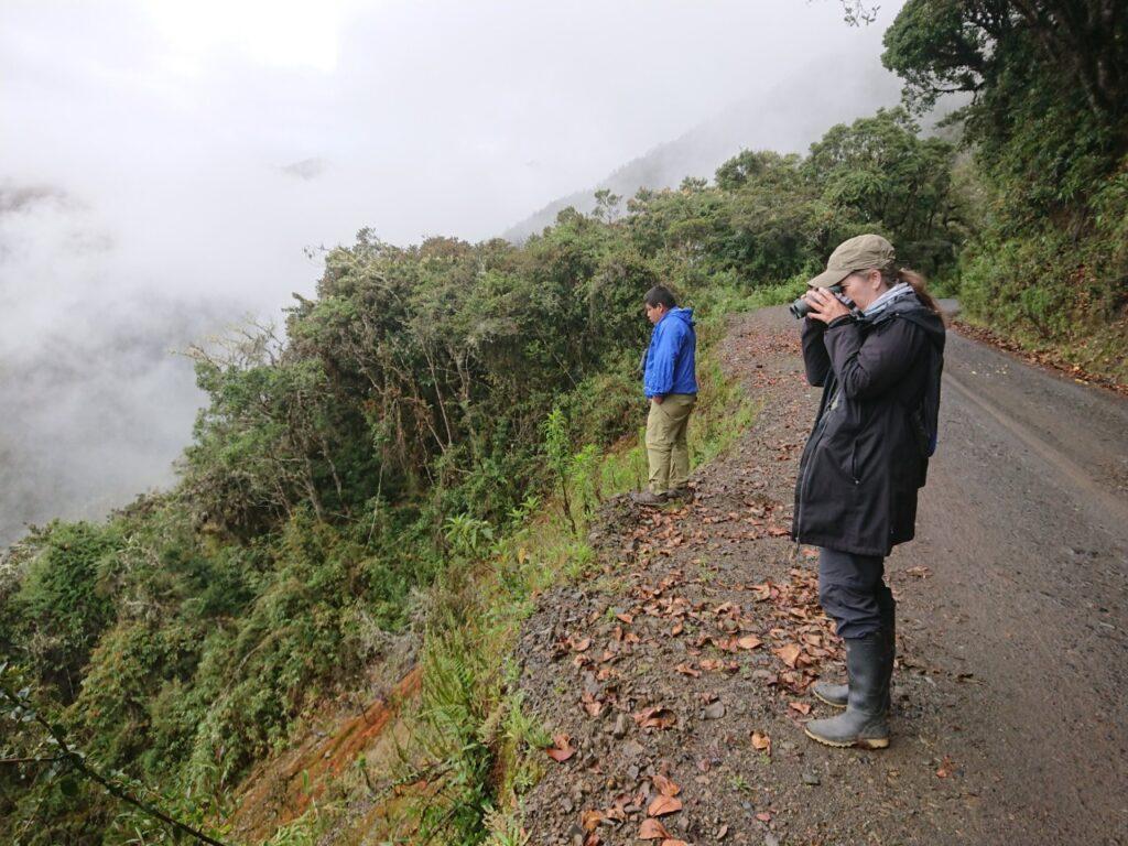 Roadside birding i tågeskoven på den berømte Manu Road.